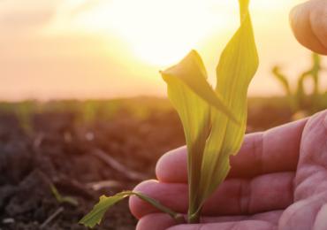 AGRONOMIA: ONDE O FUTURO DA HUMANIDADE SE DEFINE